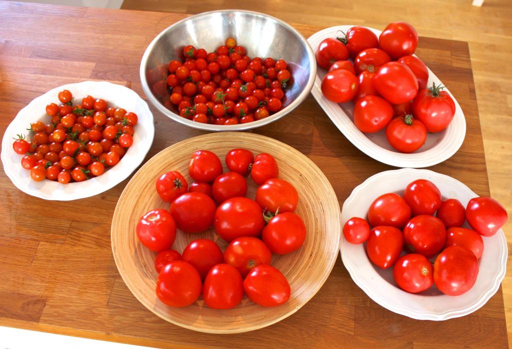 innhøsta tomater (2)